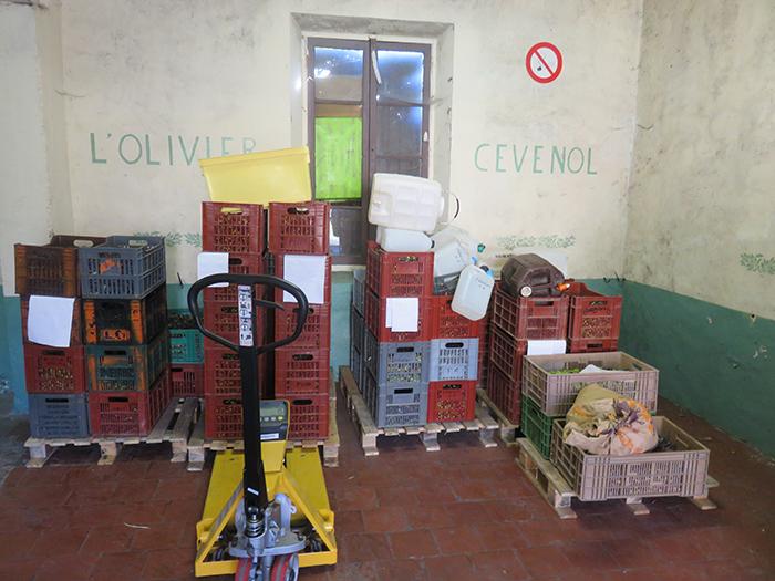 Sur les palettes, rangées par presses, les caisses d'olives s'empilent.