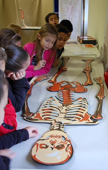 Le squelette, charpente de notre corps