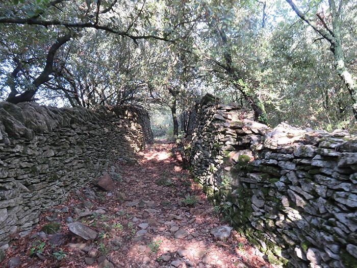 Les murs enserraient aussi les drailles pour empêcher chèvres et moutons de venir brouter les champs cultivés