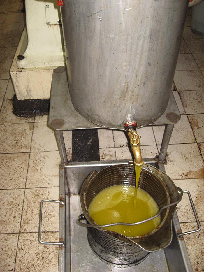 Une huile douce et fruitée s'écoule de la centrifugeuse : un régal pour les gourmets !
