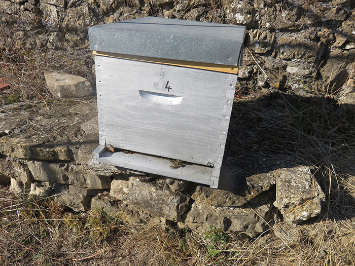 Des abeilles sur la planche d'envol : la colonie sera-t-elle encore vivante au printemps ?