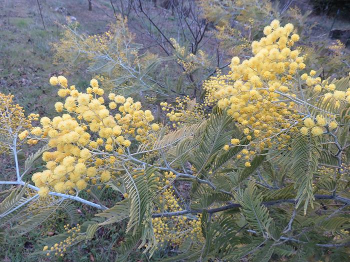 Les arbres offrent une explosion de jaunes qui réjouissent les yeux