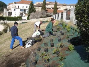 DES PLANTATIONS QUI ANNONCENT LE PRINTEMPS