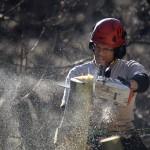 ELAGUEUR-GRIMPEUR : UN MÉTIER À LA HAUTEUR