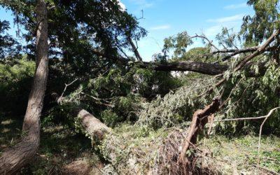 suite aux violents orages et forts coups de vent du dimanche 20 juin….